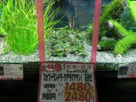水草週間セール品と在庫中の水草情報!