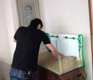 ぴんぽんぱーる水槽を作りました!