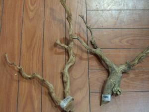 人気の枝流木入荷