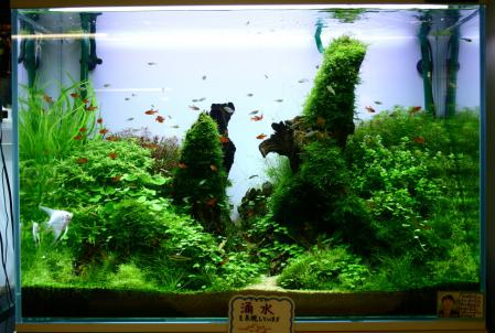 日本観賞魚フェアに向けて!