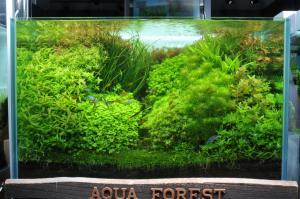 ADA世界水草レイアウトコンテストの結果がでました