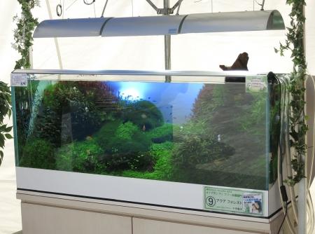 本日最終日! アクアリウムイベント「AQUA COLORS 魚の学校2014」