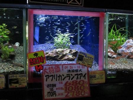 お魚セール品紹介。